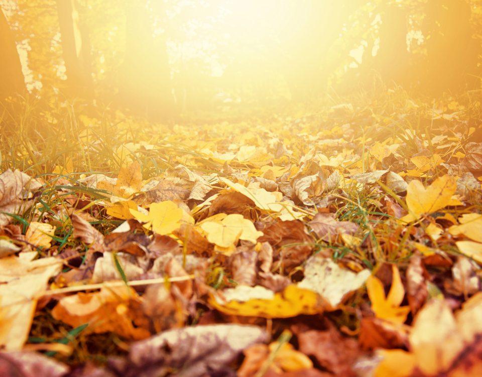 Hacer el Camino en octubre, una experiencia diferente